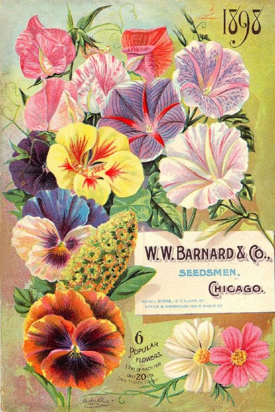 Barnard Vintage Seed Cover Picture Art Print Canvas Poster A4 A3 A2 A1 | eBay