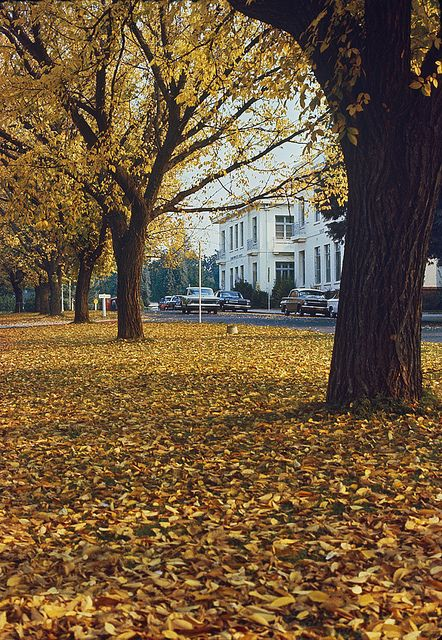 East Block offices in autumn, Canberra, 1967.