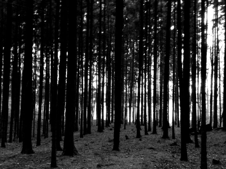 The forest behind our small village in Pilsen Region.