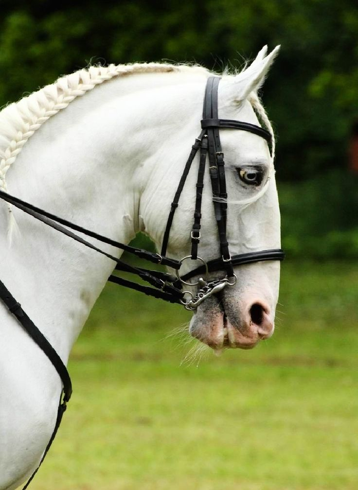 Kladruber: The Majestic & Rare Czech Horses of Emperors and Kings