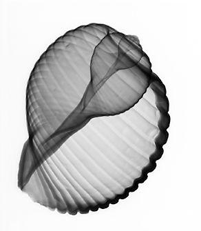 bonnet1.jpg (292×335)