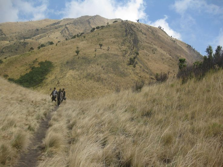 Mount Merbabu, Central Java Indonesia. 3142 Mdpl