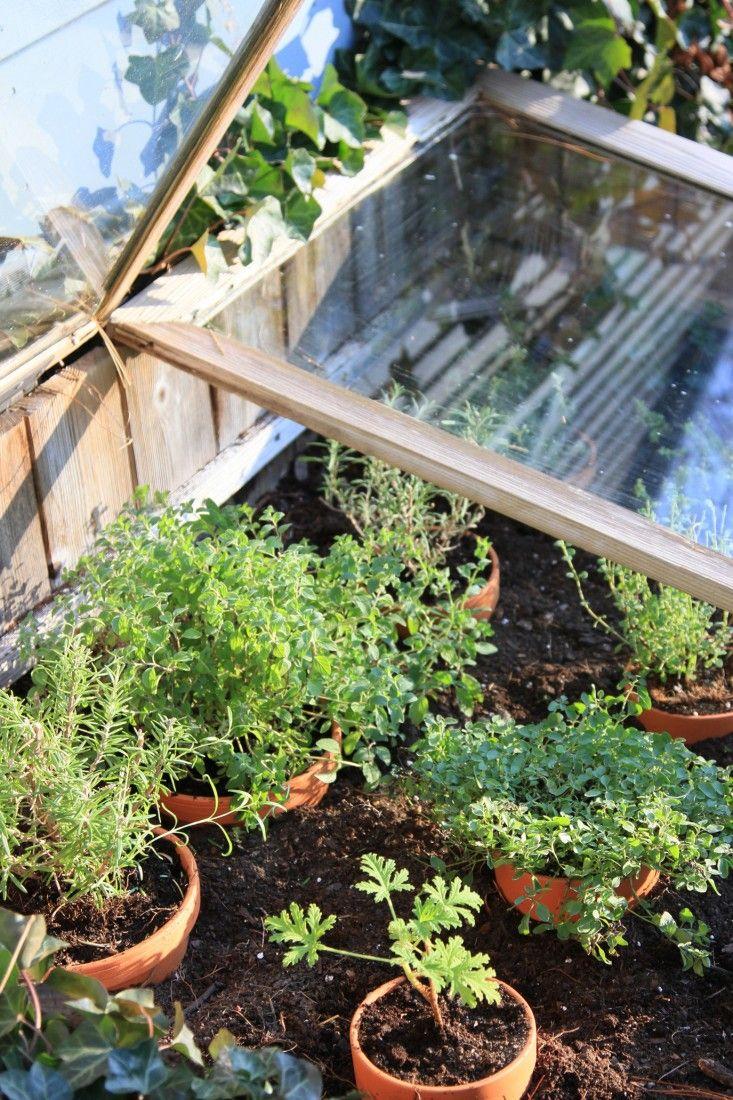 23 best cold frames images on pinterest gardening vegetable