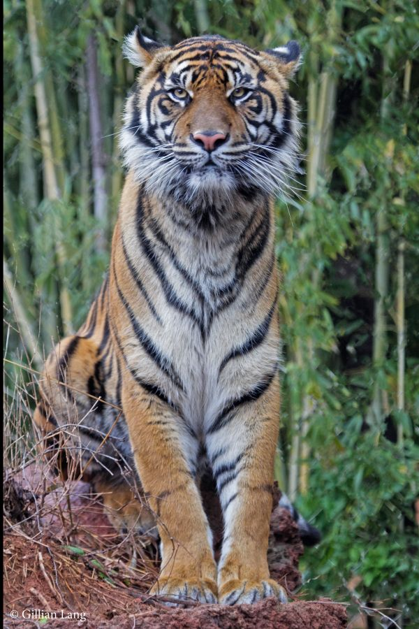 On July 21, the Oklahoma City Zoo and Botanical Garden received a female Amur Tiger cub. The cub's journey to Oklahoma is the result of the combined efforts of two amazing zoo teams and tiger conservation experts. Born at the...