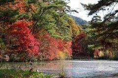 私が神戸でお気に入りの植物園神戸市立森林植物園 を紹介しますね この公園では早春の花々や新緑梅雨 のアジサイ晩秋の紅葉など四季折々の森の自然を満喫できます 広い広場には遊具などもあり特に子供連れにはオススメですよ  tags[兵庫県]
