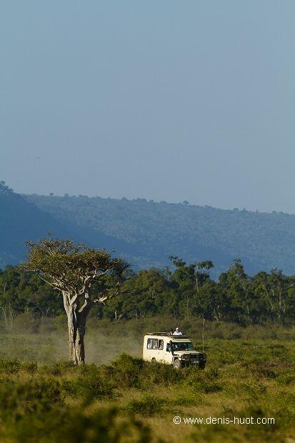Safari - Masai Mara, Kenya