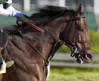 Kentucky Derby: Wet track could affect outcome #borel #bank #online http://cars.nef2.com/kentucky-derby-wet-track-could-affect-outcome-borel-bank-online/  # Kentucky Derby: Wet track could affect outcome Barbara D. Livingston Itsmyluckyday is one of two horses in Kentucky Derby with a stakes win over a sloppy or muddy track. LOUISVILLE, Ky. With Weather.com forecasting a 50 percent chance of showers Saturday in Louisville, as of this writing early Friday morning, there is the possibility for…