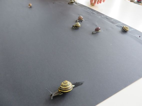 Slakkenrace met kleuters 3, thema tuincentrum, juf Petra van kleuteridee.