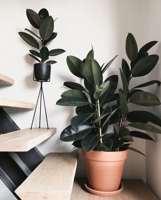 Feeling stressed? Try these 5 indoor plants! – #Fe…