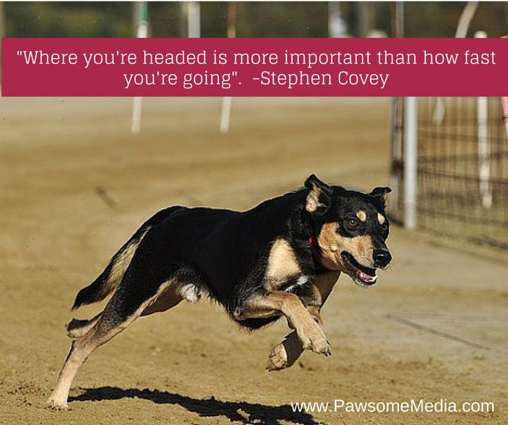Steady wins the race!