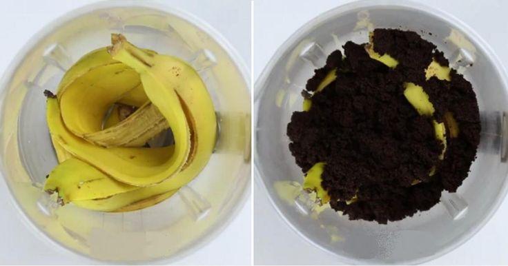 Elle conserve les pelures de bananes et le marc de café! Ce qu'elle en fait? C'est MAGIQUE!  Essayez-le! Vous verrez comme c'est efficace!