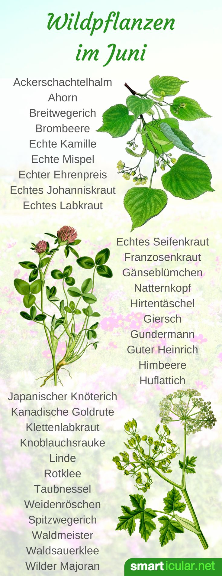 25 trendige einheimische pflanzen ideen auf pinterest einheimische pflanzen kalifornien - Einheimische pflanzen im garten ...