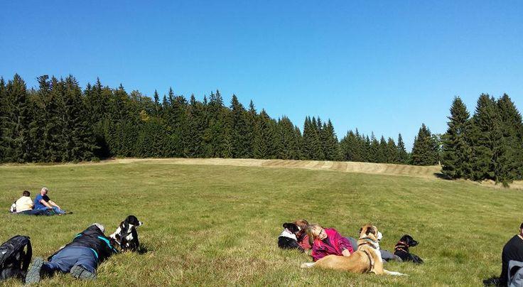 Wandern im Naturpark Bayerischer Wald, Wellness & Spa, heimische Spezialitäten und Ferien spezialisiert auf Hunde mit Hundewiese, Hunde-Badeteich, Hundeloipe, Physiotherapie, Mitnahme ins Restaurant und vieles mehr. Hundefreundliche Ferien in Bayern! 3 Nächte ab € 166,50 p. Person/Doppelzimmer - Hunde gratis!