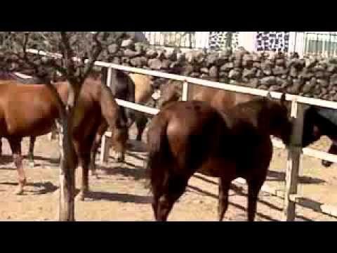 "Rancho San Miguel, ""CRIADERO DE CABALLOS JP"" - http://www.nopasc.org/rancho-san-miguel-criadero-de-caballos-jp/"