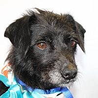 Hi, I am Mimi, a small Terrier. I was rescued by CARE during Hurricane Harvey. I was a Momma to a whole litter of puppies who are each in their own forever homes and now it is my turn to find my own family in Austin, TX. #dogs #adoptdontshop