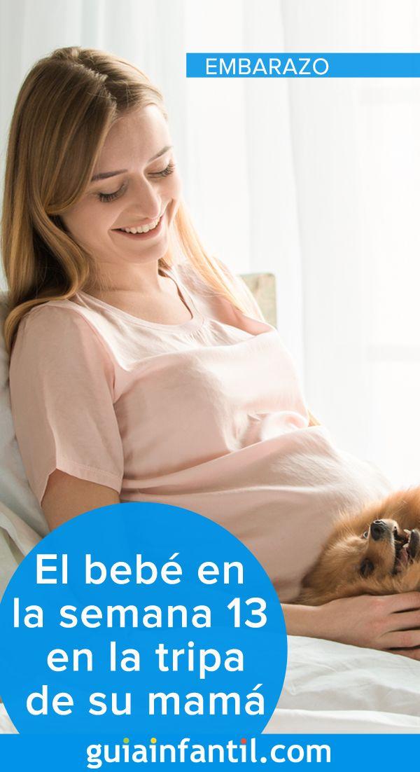 El Bebé En La Semana 13 En La Tripa De Mamá Desarrollo Semana A Semana Bebe Embarazo Barriga