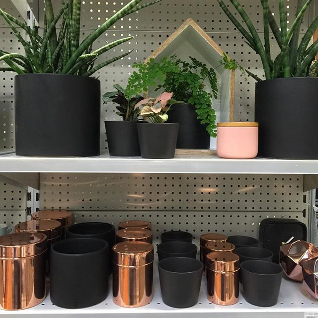 Just loving the matt black and copper combo. No wonder there is a copper craze. emojiemojiemojiemojiemojiemojiemojiemojiemojiemojiemojiemojiemojiemoji #sansevieria #sansevieriacylindrica #mattblackpots #cannisters #copper #pots #plants #coppercannisters #copperdecor #armadale #bridgerd #camberwell #glenferrierd #hawthorn #homedecor #indoorplants #loverichmond #my3121 #malvern #melbournegirl #richmondmitre10 #richmond3121 #swanstreet #southyarra #toorak #urbanlisted