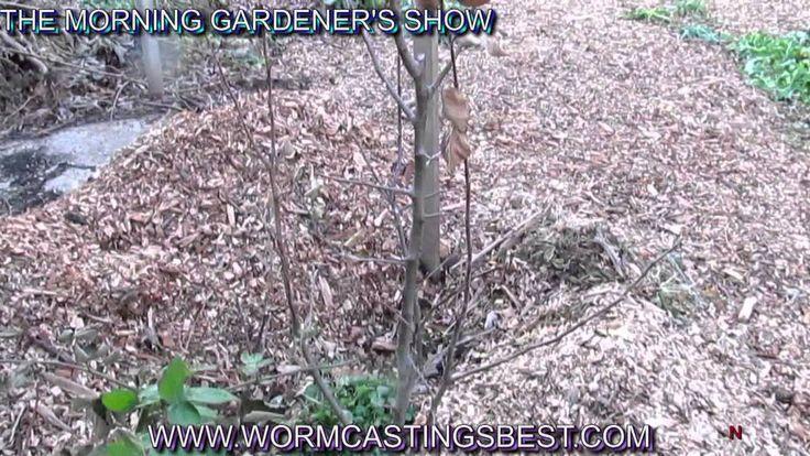 785 best 4 soil plant health pests images on for Black garden soil