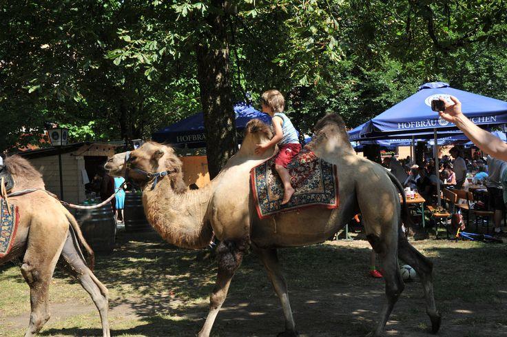 https://flic.kr/p/wmZLJg   Immer wieder ein Riesen #Spaß: #Kamel #reiten bei #Veranstaltungen im #Biergarten #München Süd