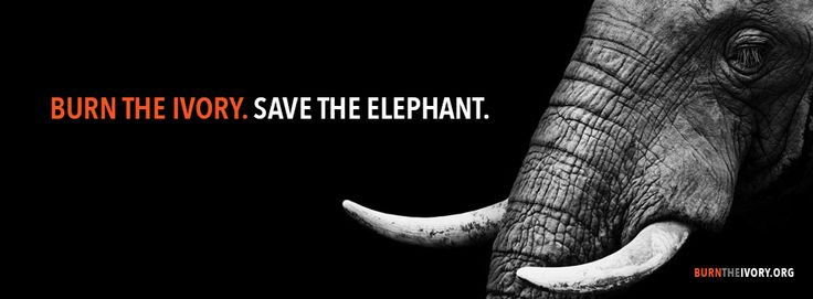 Follow us on Facebook for the latest #elephant news, Action Alerts, resources, ways you can contribute to elephant conservation efforts & much more! www.facebook.com/burntheivory