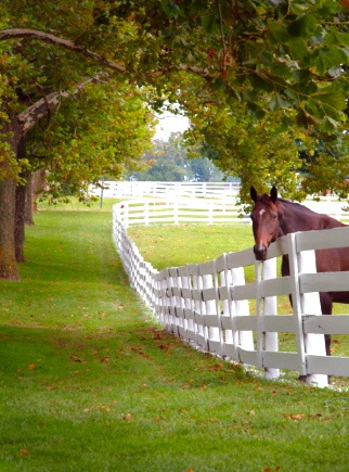 34 Best Horse Fence Images On Pinterest