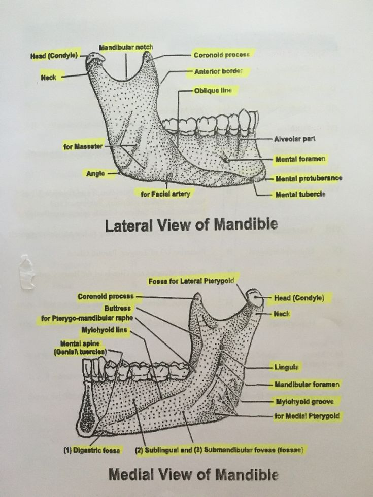 Anatomy of Mandible dental hygiene national board exam