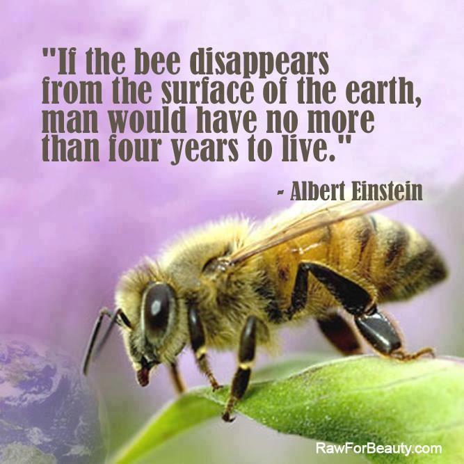 Because they pollinate plants, bees are one of the most important creatures on the Earth. More important than man certainly, because man is responsible for the destruction of the Earth and bees help the Earth grow.