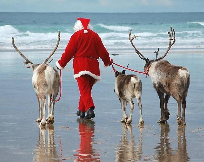 Santa & his reindeer at the beach