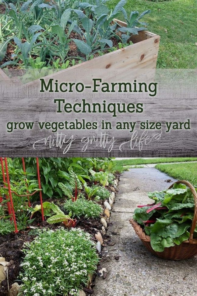How To Succeed With Your Own Organic Garden Farming Techniques