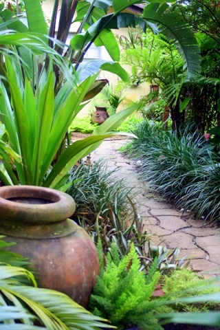 Bird of paradise, foxtail fern, liriope and bromeliads along a path
