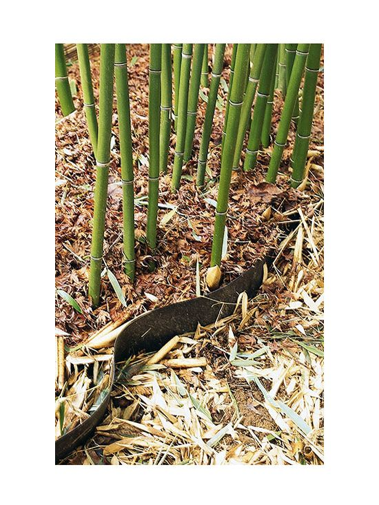 118 Best Images About Bamboo On Pinterest Growing Bamboo