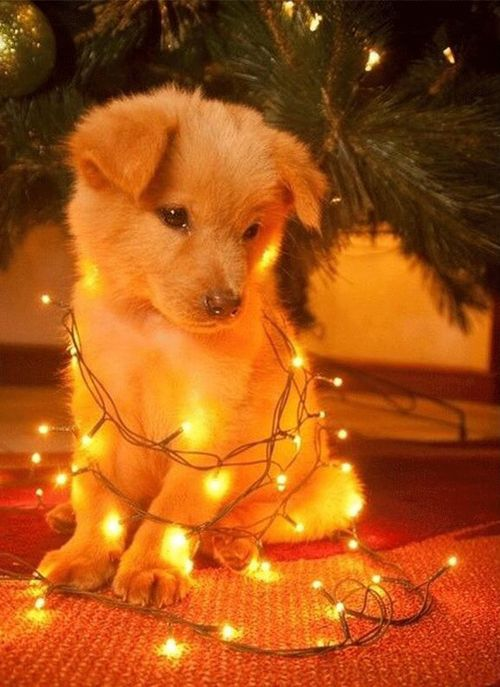 This puppy wants to help with the decorations