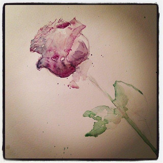 Anniversary rose