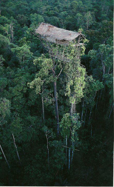 New Guinea Sky scraper - A tree-house in West Papua