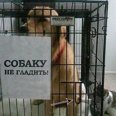 On the plate it says: Do not iron the dog!  Follow us on: - https://goo.gl/NKk858 - Twitter: https://goo.gl/PlLXiR - Pinterest:https://goo.gl/9NIzFX - Facebook:https://goo.gl/Y7XnNU  #instacat #russianminiatures #pets #petsagram #cat #cats #catsofinsta #catsofinstagram #catstagram #cutecat #catoftheday #lovecats #kitty #bengal #cats_of_instagram #dailycat #bestmeow #kitten #kittensofinstagram #meow #catsareawesome #loveofmylife #lovekittens #kittenlove #lazycat #котик #kittycat