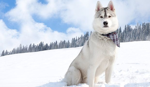 A kutyák sokkal többet jelentenek számunkra egy hűséges társnál. Az élet egy kutyával vagy többel nemcsak szórakoztató, de állandó forrása a szeretetnek. A