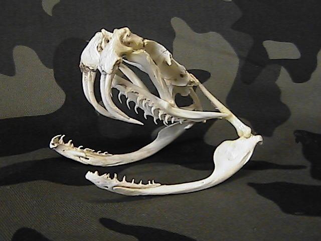 Skull Price List