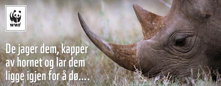 Naturvern er effektiv fattigdomsbekjempelse og gir resultater for både dyr, natur og mennesker. Som neshornfadder bidrar du til WWFs kampanje mot ulovlig jakt av neshorn.     Bli neshornfadder - WWF Norge