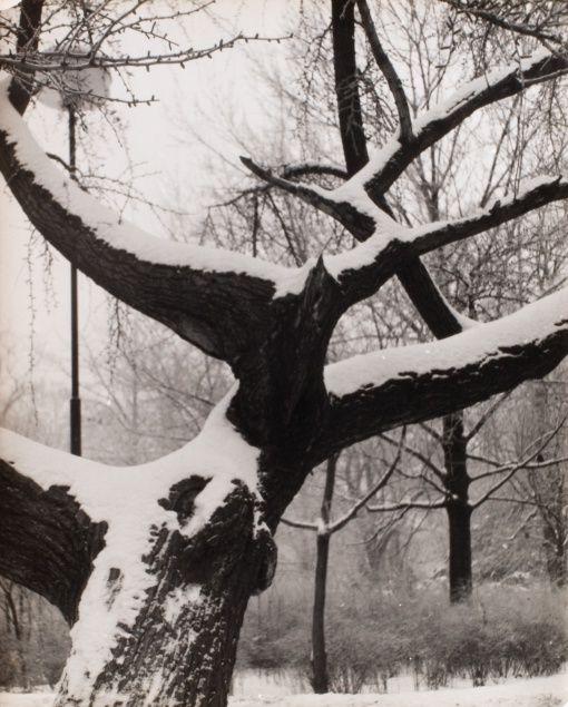 Jan Lauschmann (1901 - 1991) Stromy, 1949