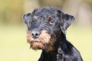 Le fait que votre chien mange ses excréments est un comportement vraiment gênant, un réel trouble connu et reconnu : c'est ce que l'on appelle la coprophagie.