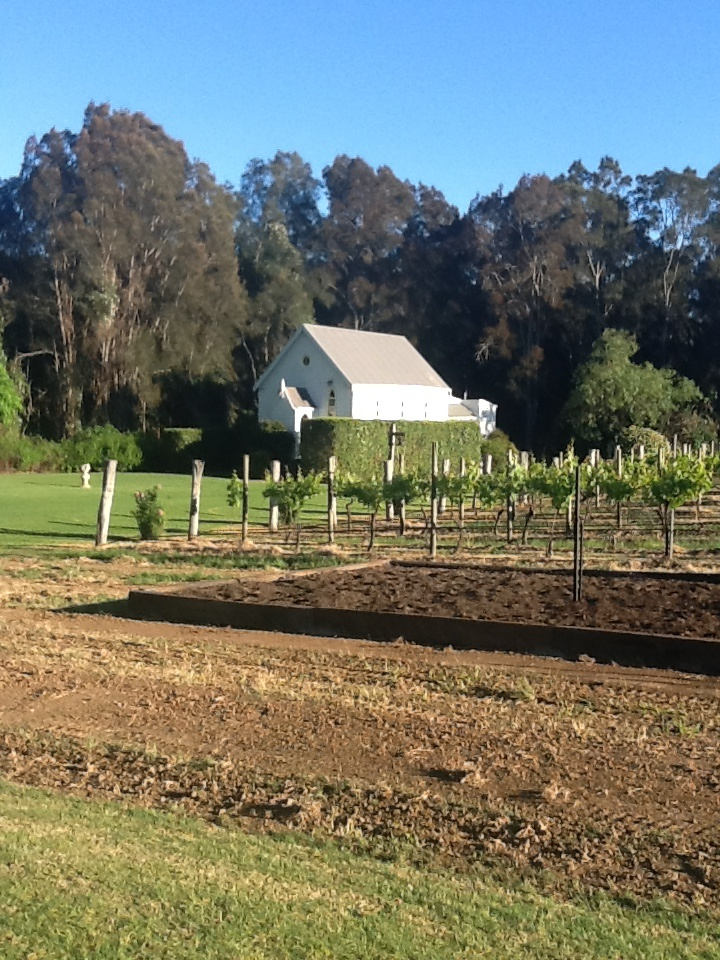 New veggie patch & vines at Roberts Restaurant