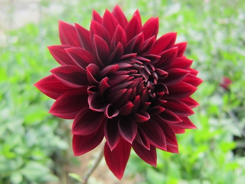 Beautiful red dahlia butterfly wedding pinterest