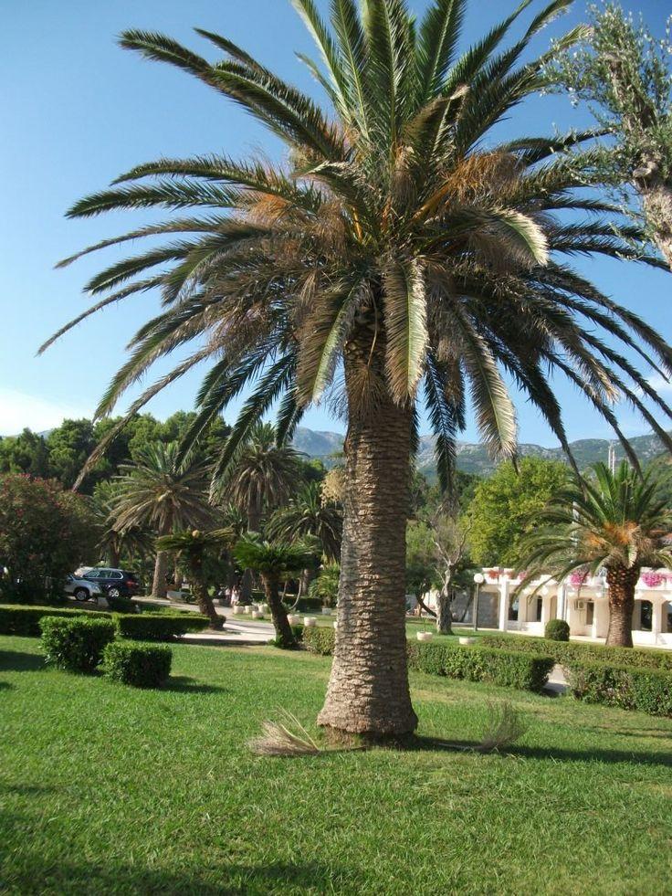 Czarnogora Budva Sw Stefan - Montenegro, Bałkany, Adriatyk #Czarnogóra #Montenegro #Budva #Kotor #Św #Stefan #Nikola #Podgorica #Adriatyk #Matuszyk #Adriatyk #Kotor