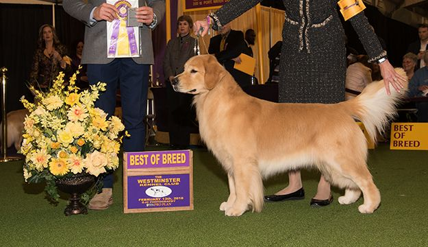 Pin On Westminster Dog Show