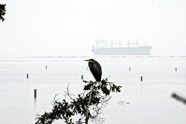 heron and freighter in fog
