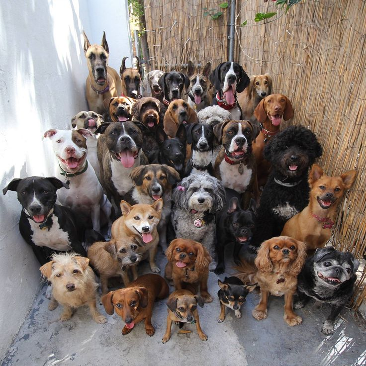 30 dogs posing and looking straight at the camera