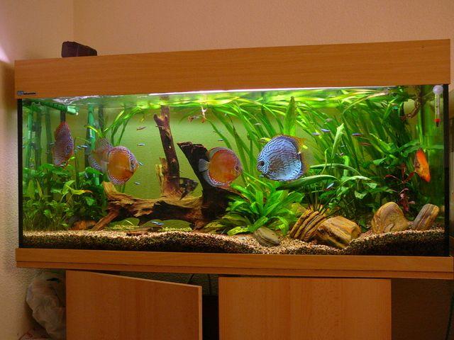 Las 25 mejores ideas sobre peceras de agua dulce en for Peceras con peces