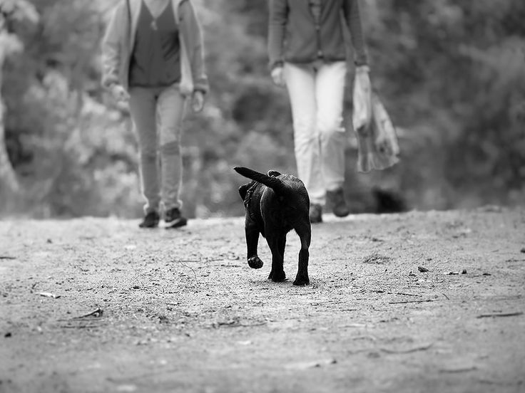 Doggieshoot, Hello, Big World