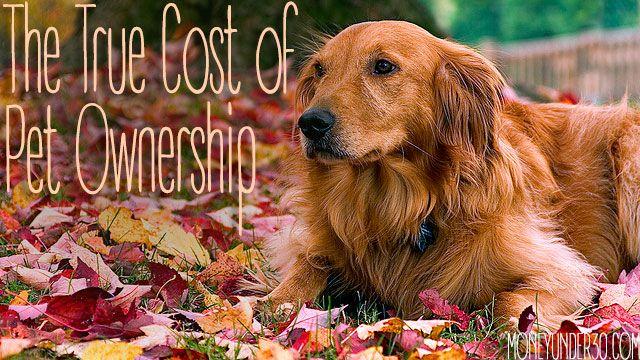 Can A Trainign Collar Be Good At Dog Parks