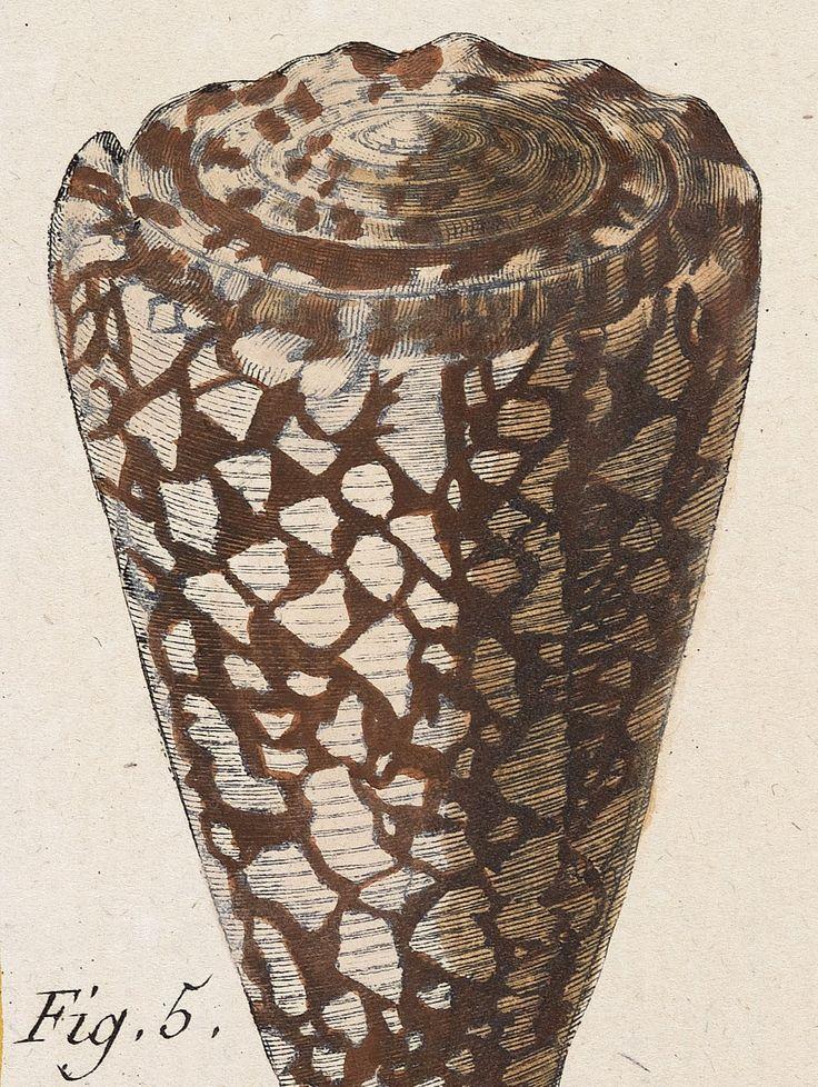 Jean Baptiste de Monet, Chevalier de Lamarck | Conus | Tableau encyclopédique et méthodique des trois regnes de la nature (1791-1798)